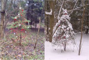 Sunnybrook Dec~12~Tree before+after.jpg