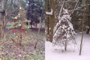Sunnybrook Dec~12~Tree before+after.jpg