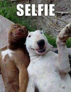 pitbull selfie