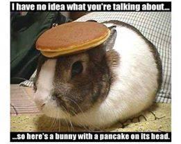 pancake hamster