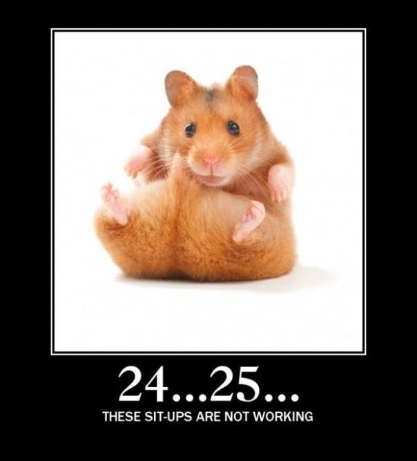 funny-animals-35