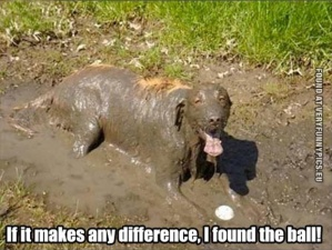 funny-picture-dog-found-the-ball-in-mud